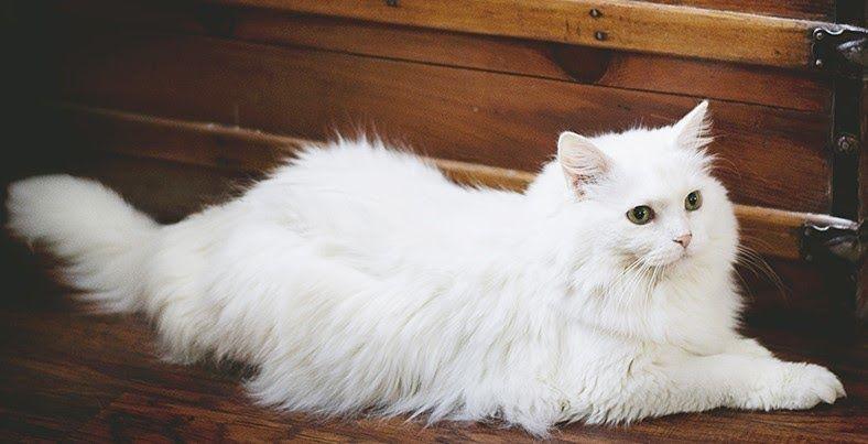 30 Gambar Kartun Oshin Jepang Biarpun Keseruan Gambar Itu Nampak Biasa Tetapi Foto Itu Dapat Mengubah Mood Kita Mulai Yang Di 2020 Kucing Kucing Betina Kucing Putih