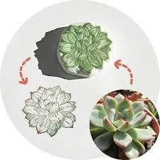 succulent logo - Google 搜索