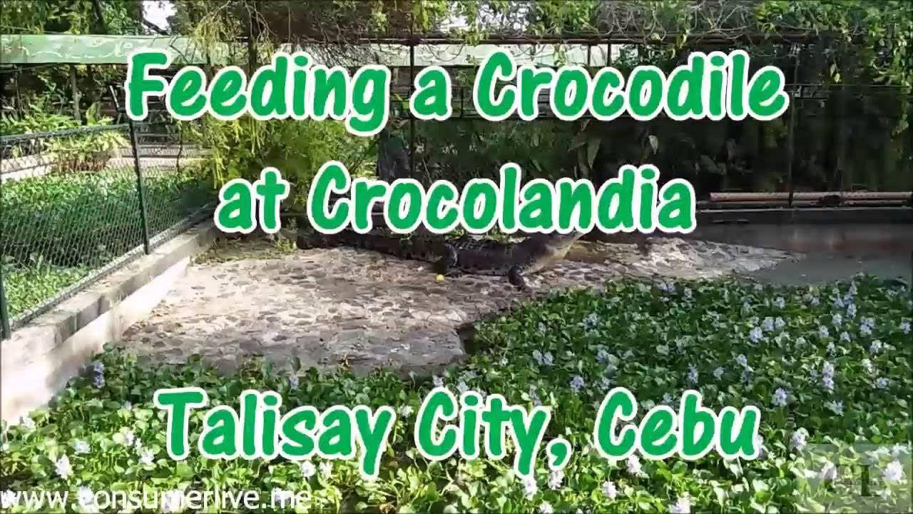 Feeding a Crocodile at Crocolandia (Talisay City, Cebu) 2016
