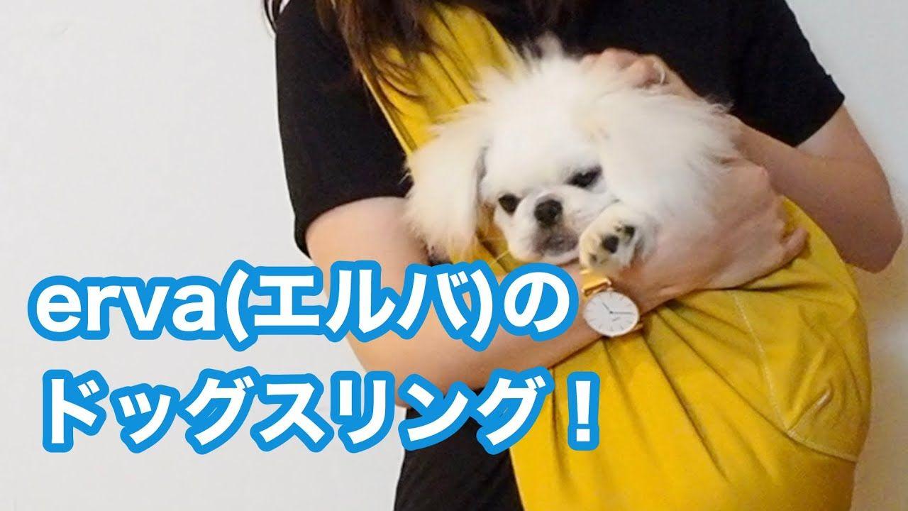 キョンちゃんねる ペキニーズ Pekingese おしゃれまとめの人気アイデア Pinterest キョン ちゃんねる ペキニーズ 子犬 エルバ
