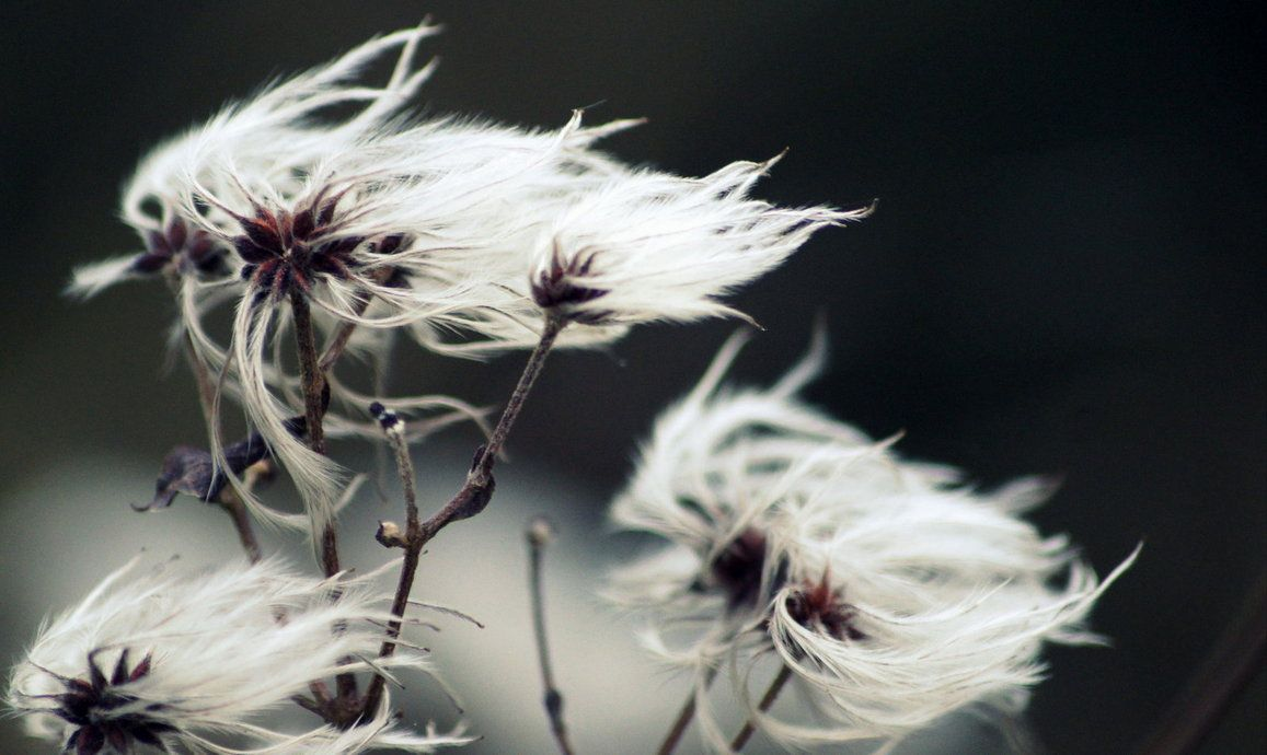 wind_by_haynsrt-d5q9q9y.jpg (1157×690)