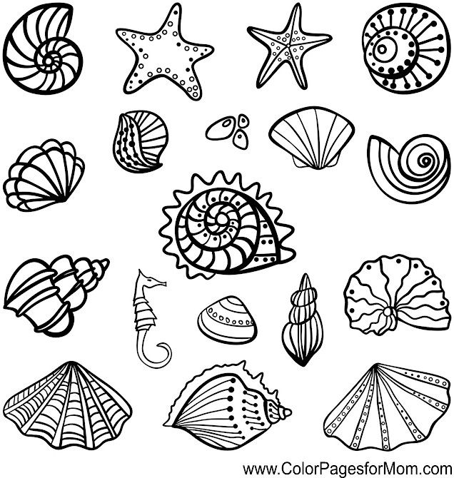 Shells colouring page adult colouring under the sea for Shells coloring page