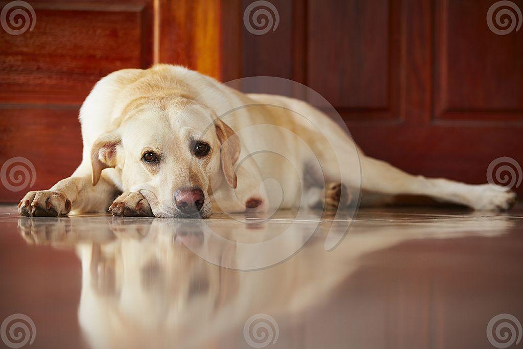 Does Your Dog Slip Slide Or Struggle To Rise On Hard Surface