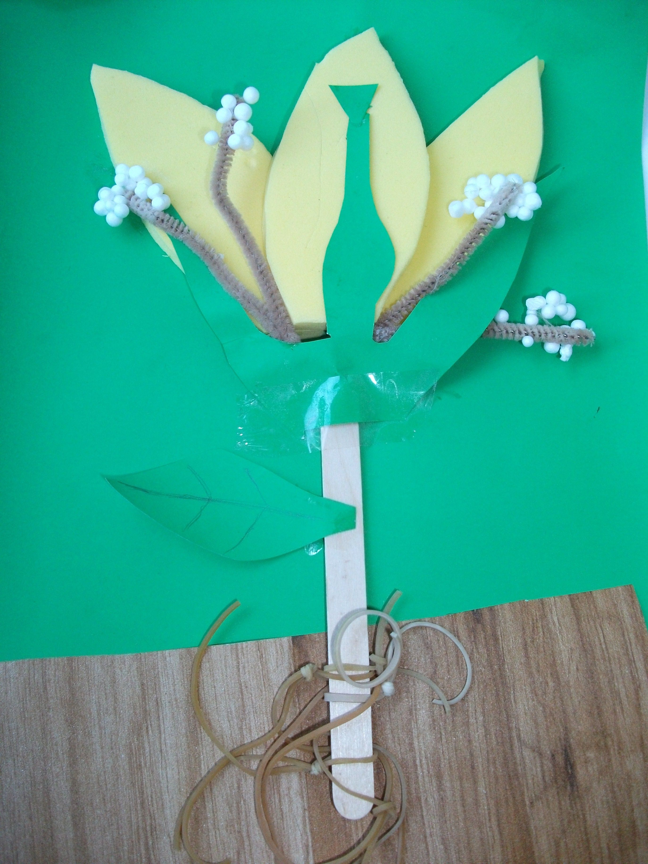 Cross-section of a flower (KS2 Science lesson idea ...