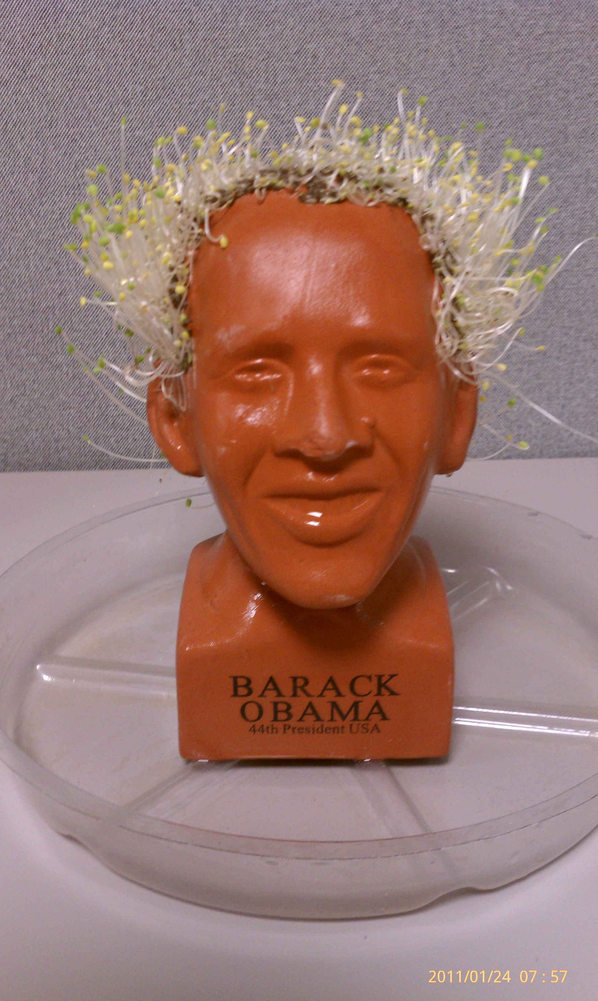 Genius Obama Chia Pet Sprouts Growing Out Like An Old Mans Hair So Funny 8 Out Of 10 What Do You Think Obama Chia Pet Chia Pet Hair Humor