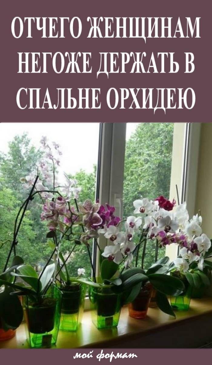 цветы в огороде приметы