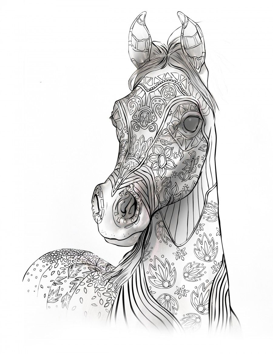 Adult Coloring Book Page Beautiful Stallion For Adult
