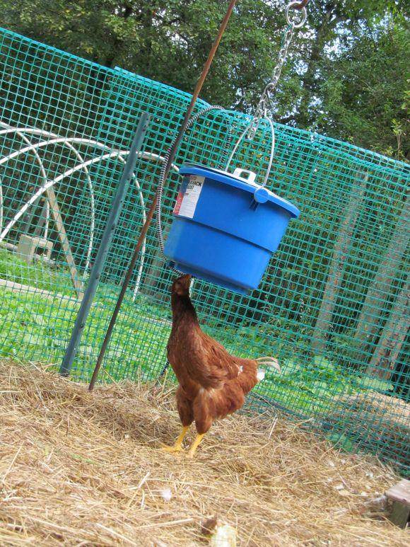Img 2040 Chicken Waterer Backyard Animals Pet Chickens