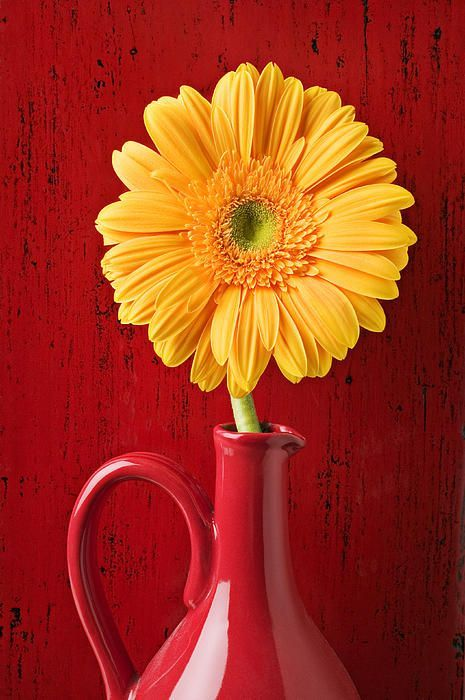 Daisies Vase | Yellow Daisy In Red Vase Photograph by Garry Gay - Yellow Daisy In Red ...