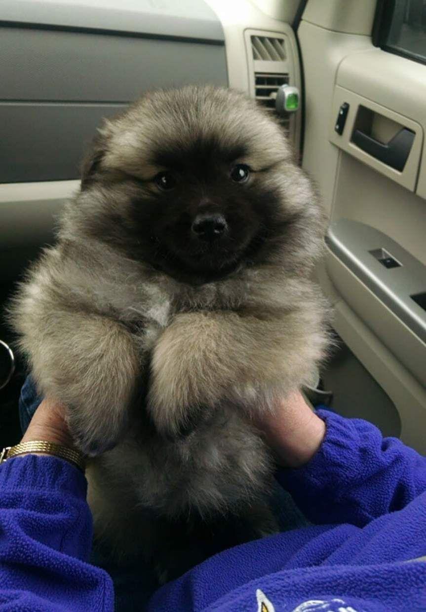 Simple Puppy Chubby Adorable Dog - 3070580e5d7368afeda1a1642b9e1c1e  Graphic_58868  .jpg