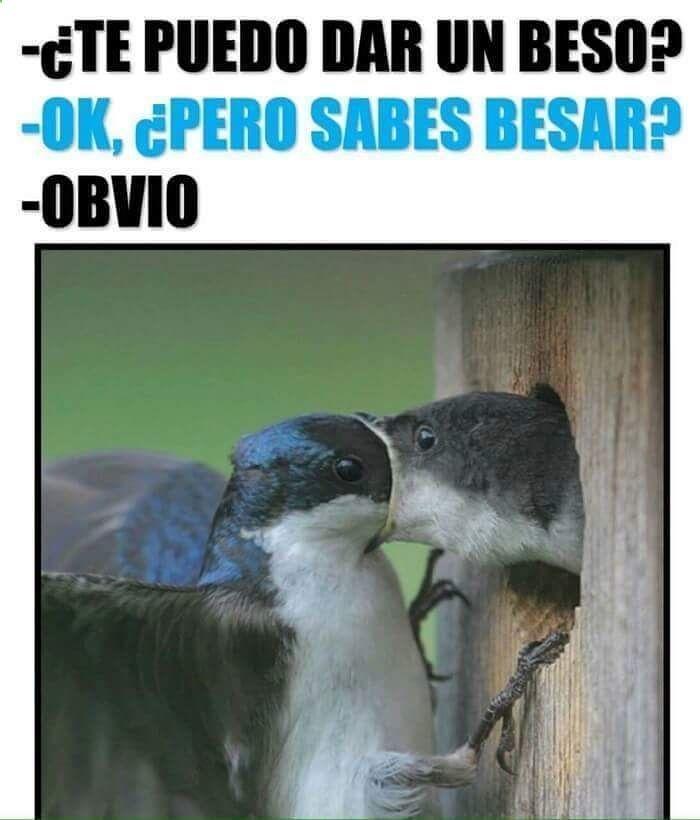 Pos claro ... TOMA!! #memes #chistes #chistesmalos #imagenesgraciosas #humor www.megamemeces.c...