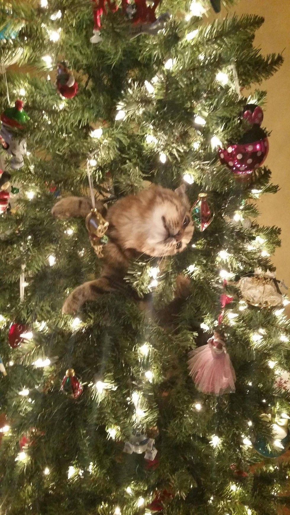 Cats Vs Christmas Trees.For The Love Of Animals Pass It On Four Cats Vs