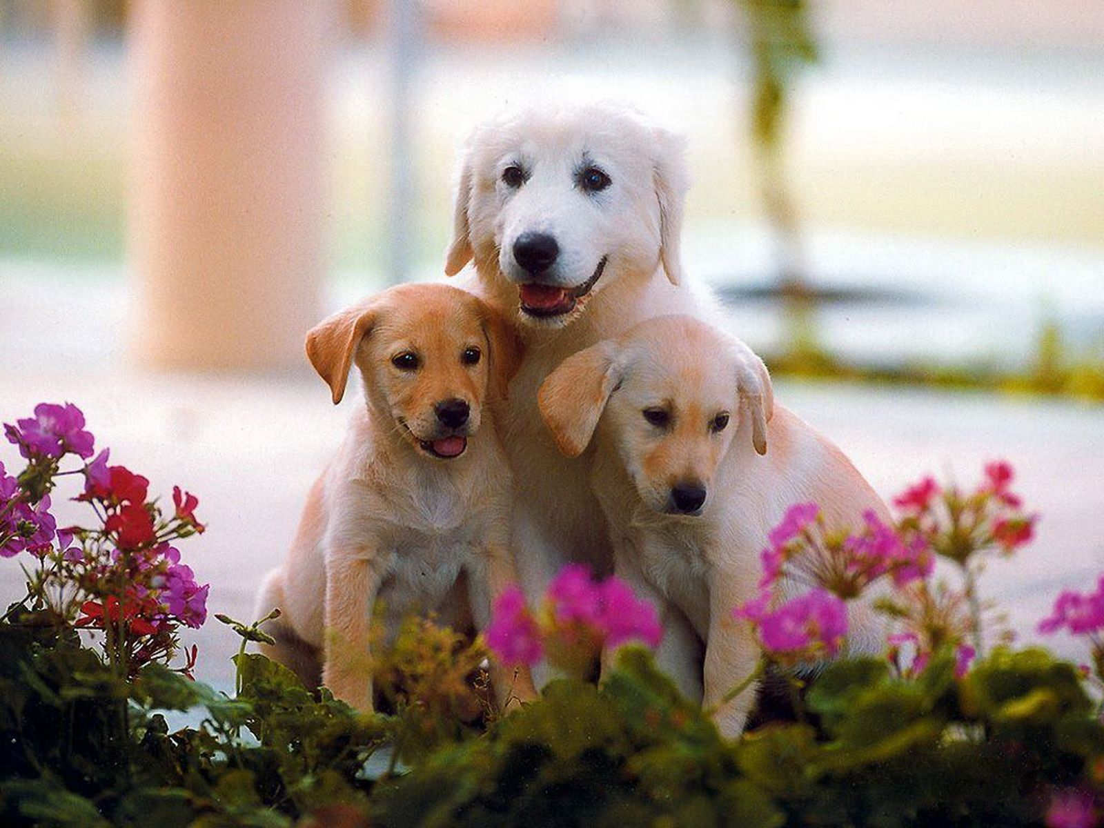 Cute Dog Family Cute Dog Wallpaper Cute Dogs Images Cute Dogs