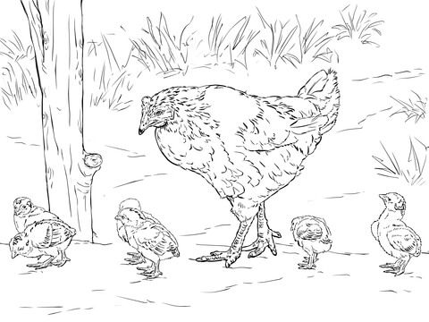 Hen With Chicks Coloring Page From Chicken Category Select 28148 Printable Crafts Of Cartoons Nature Animals Bible And Many More