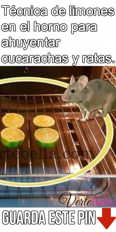 Como Acabar Con Las Ratas En El Jardin Asi Es Como Al Fin Logre Eliminar Estos Molestos Roedores De Mi