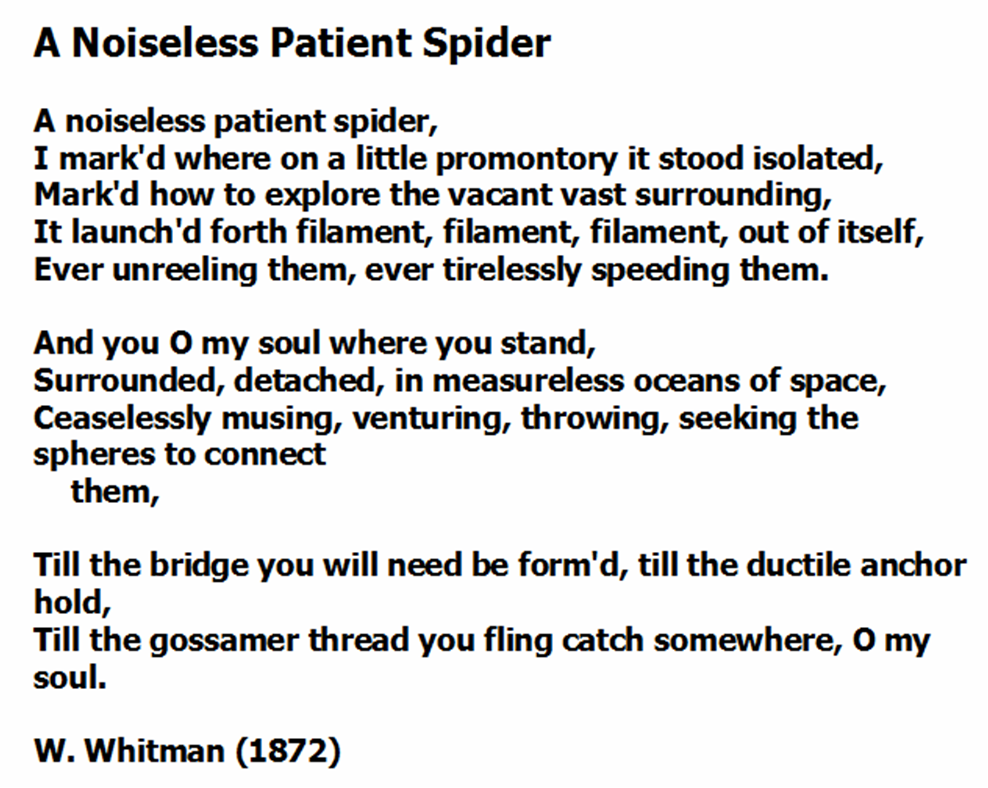 in the margin explain what surrounds the noiseless patient spider and you o my soul