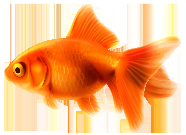 Goldfish Png Clipart Best Web Clipart Pet Fish Goldfish Animals For Kids
