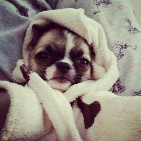 Albiee in his dressing gown ready for bed | albie | Pinterest