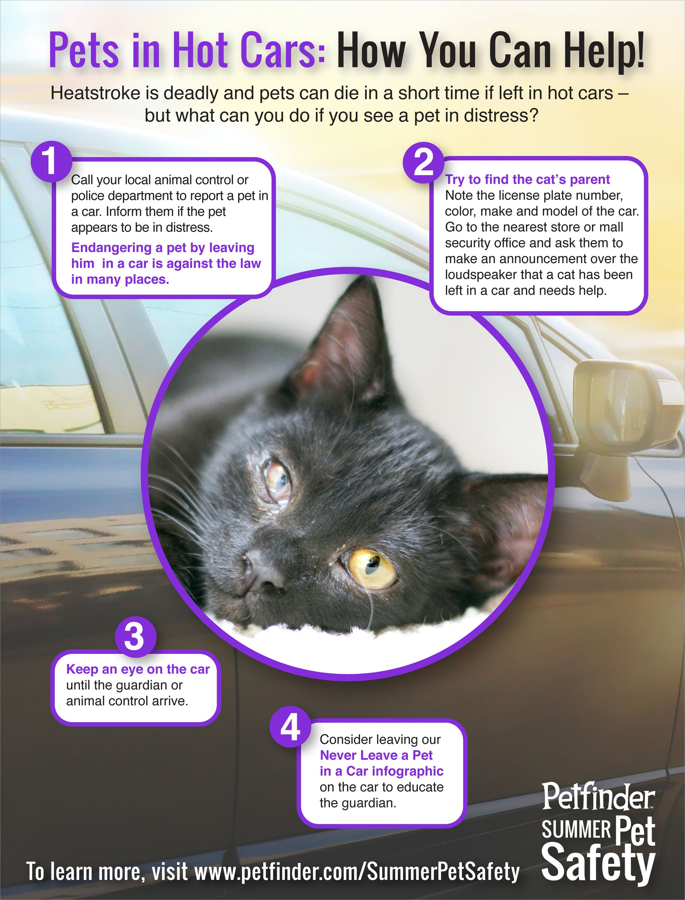 infographic gallery: must know vacation safety tips | pet travel