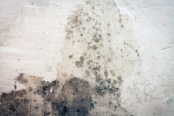 how to remove mold from concrete basement walls doityourself com rh pinterest com
