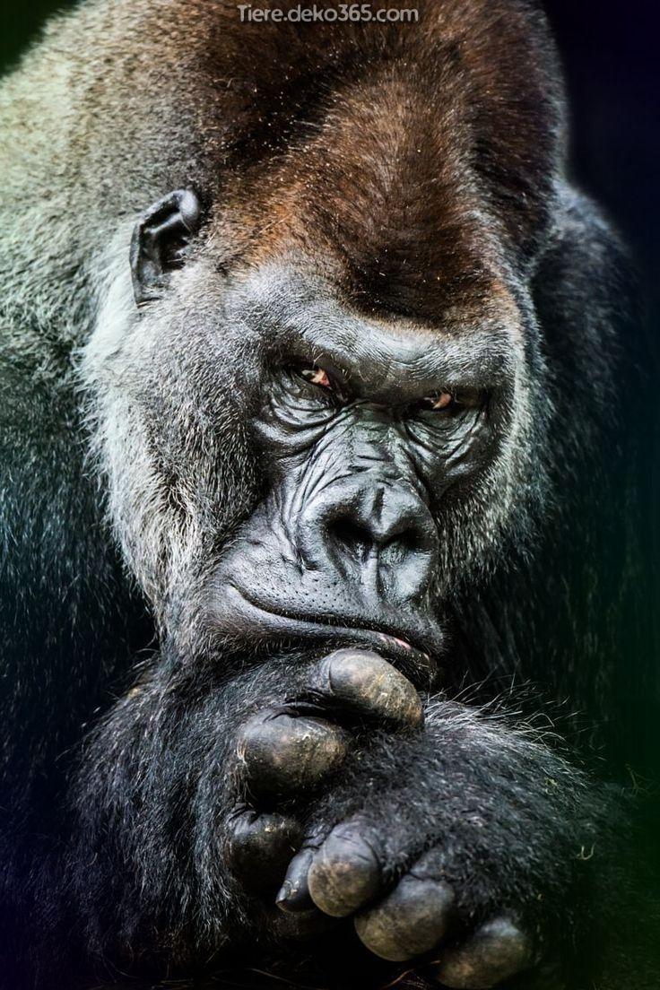 Kreative Und Grossartige Besten Coolen Tierbilder Animals Animals Beautiful Western Lowland Gorilla