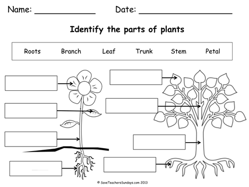 Label Parts Of A Plant And Parts Of A Tree Worksheetpdf Science