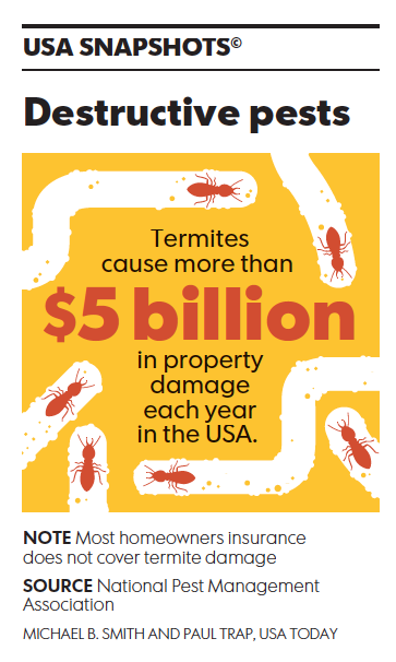 Every Year Termites Cause More Than 5 Billion In Property Damage In The United States Here S How To Spot Termites I Termite Control Termites Termite Problem