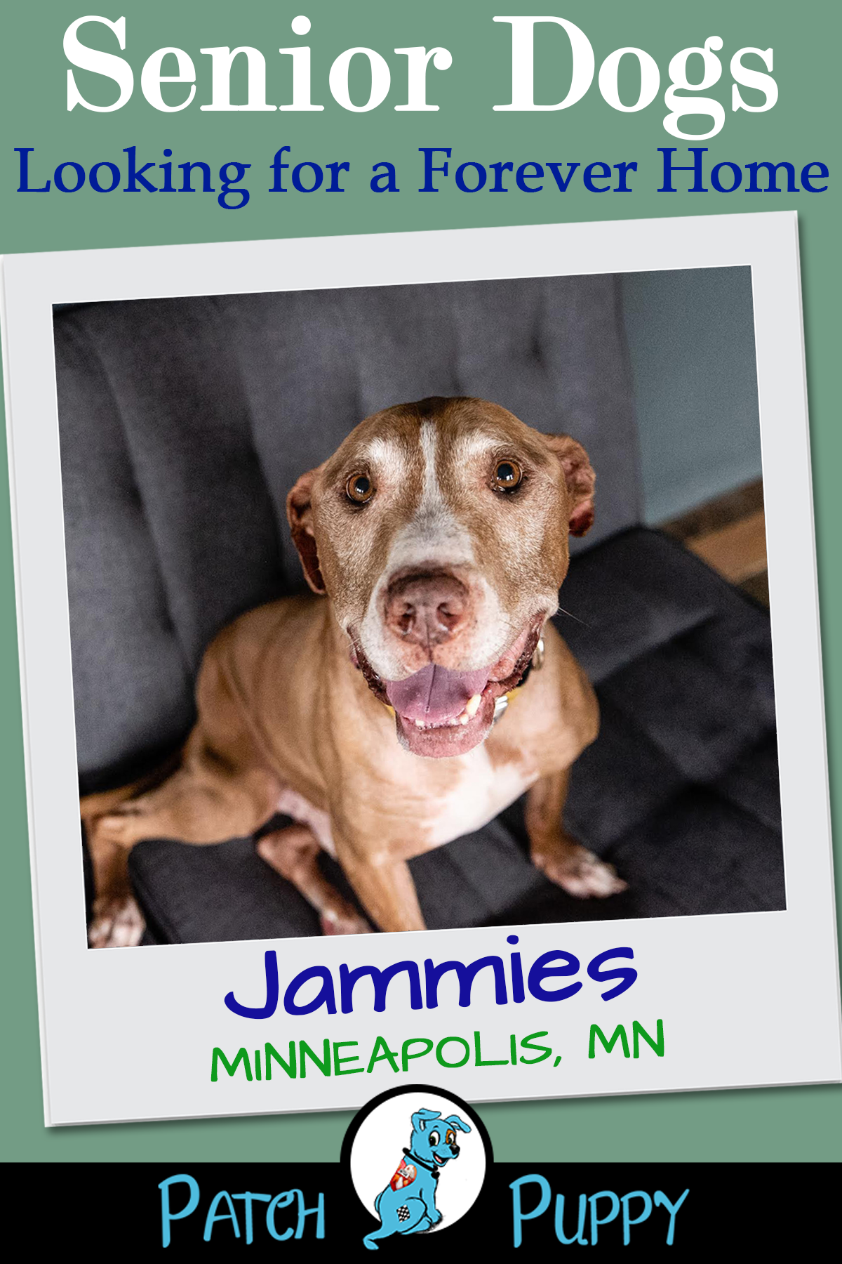 Senior Spotlight Gallery Meet Our Featured Seniors Every Week Shelter Dogs Dogs Dog Lovers