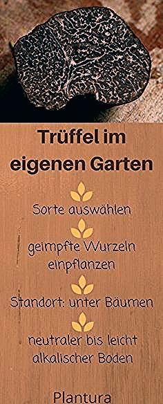 Trüffel anbauen: Der edle Pilz im eigenen Garten - Plantura