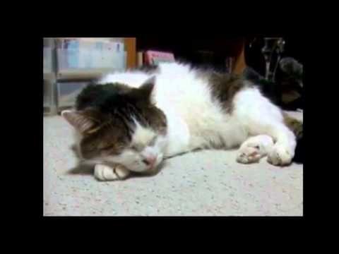 Kitty sings the blues-Original