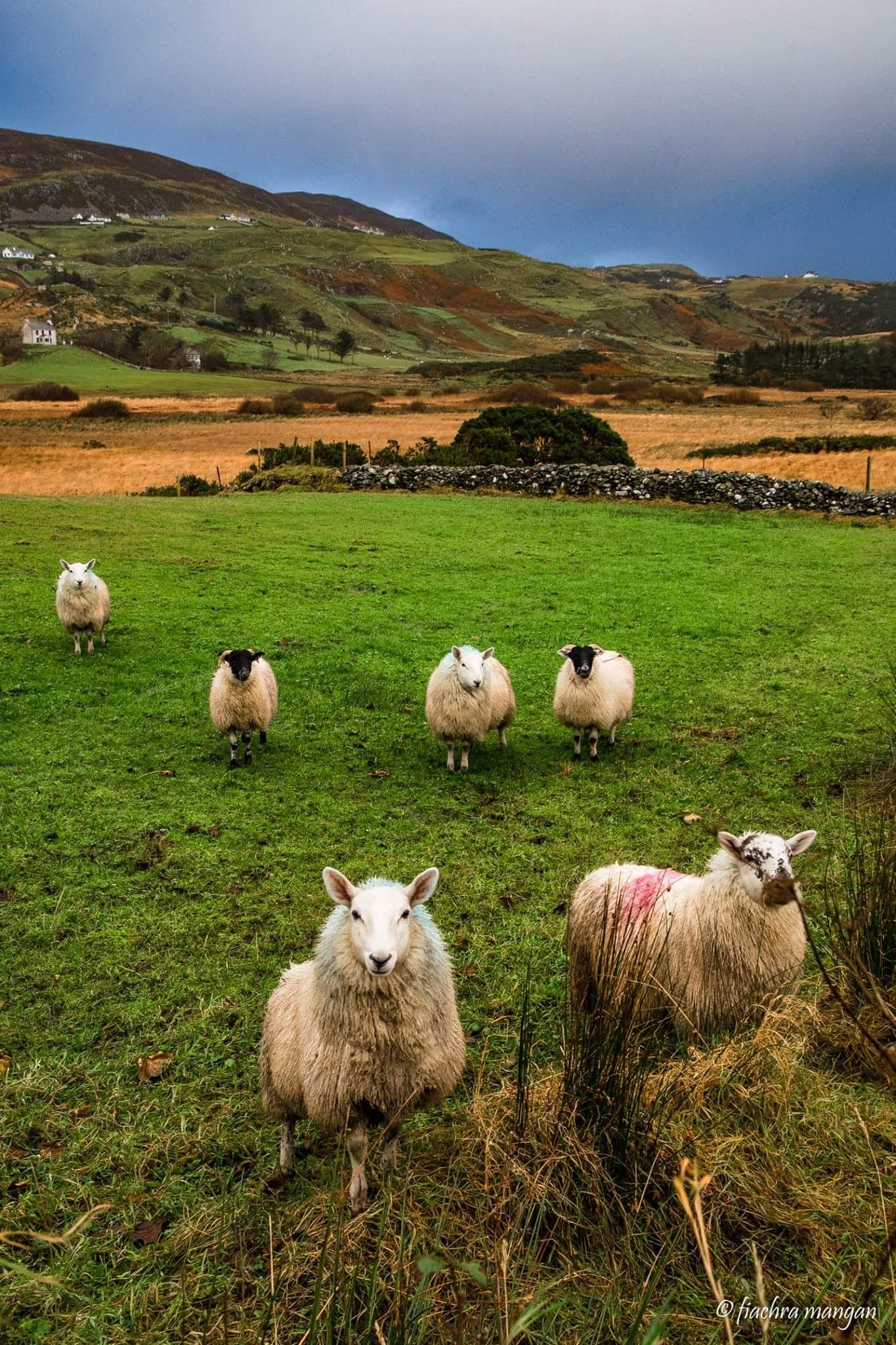 Lovely Picture Of Donegal Irland Reisen