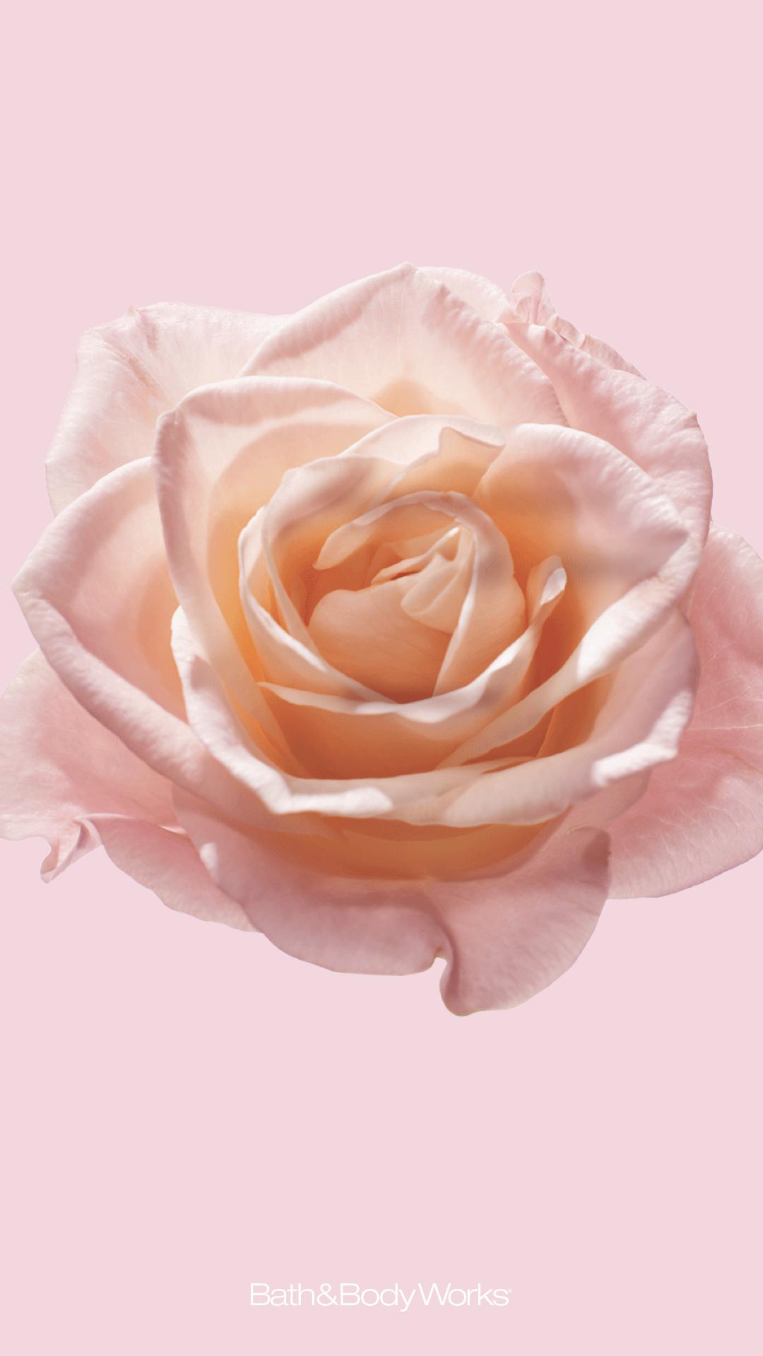 Blush wallpaper, Pink wallpaper iphone ...