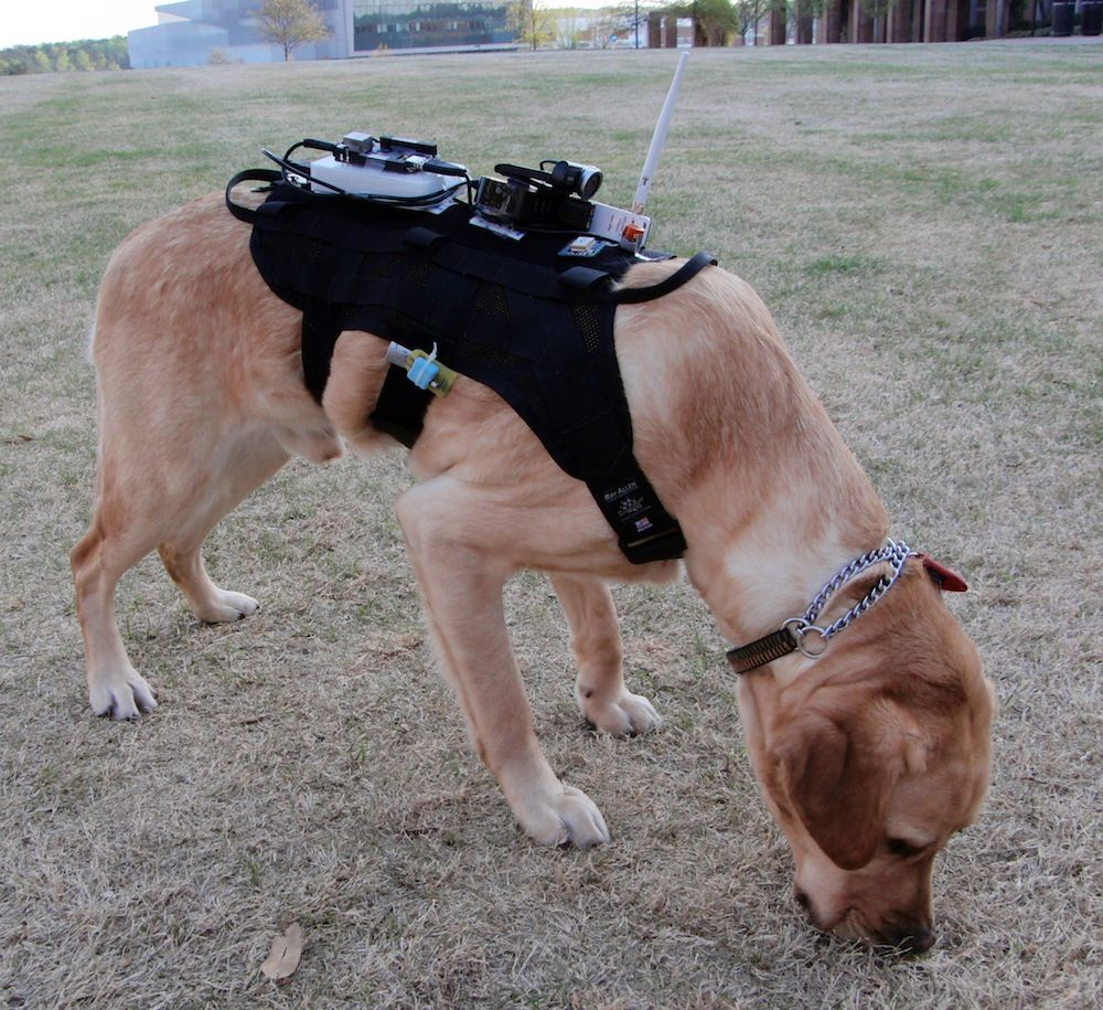 Canine 20 dogs in hightech gear could aid searchand