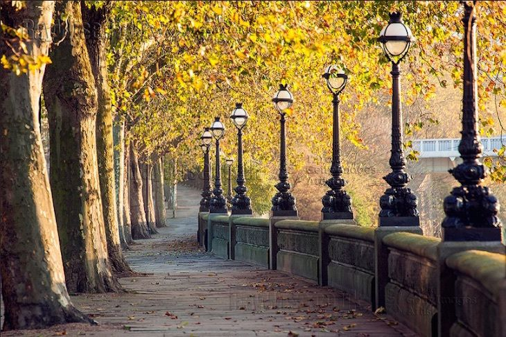 Chelsea Embankment. Photo: Ray Wise