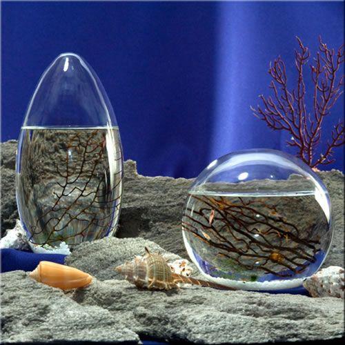 Ecosphere Totally Enclosed Shrimp Habitat I Want One Ecosphere Ecosystems Sea Monkeys