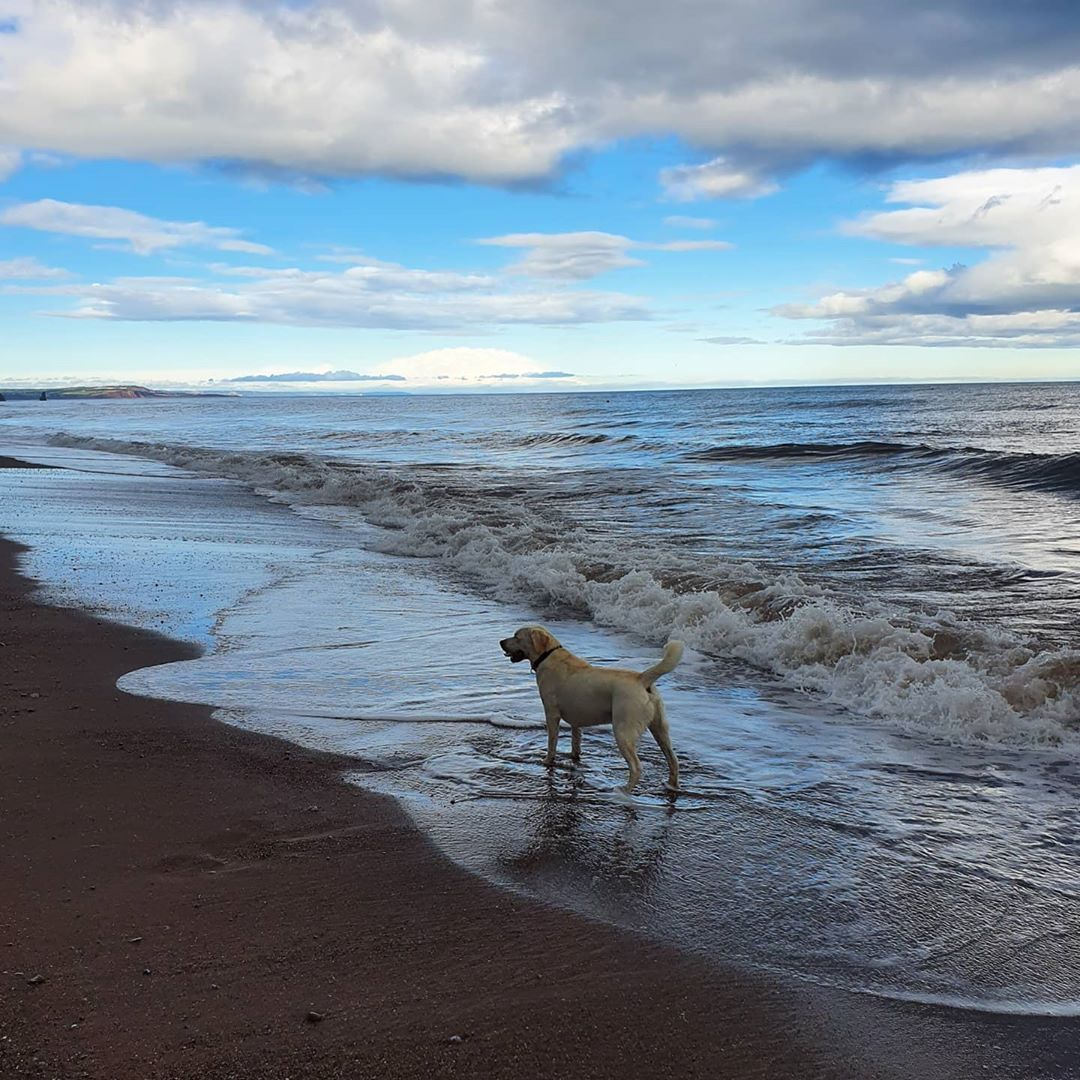 The Caĺm Ish After The Storm Storm Stormyweather Nowforsomecalm Onthecoast Beachbumdog Beach Sea Shadesofgrey The Great Outdoors Shades Of Grey Dogs