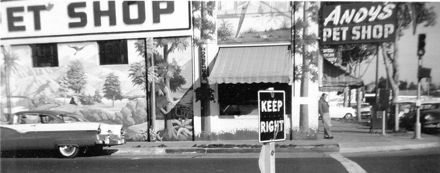 Pin by Bob Emerson on Santa Clara Valley, Calif. Highway