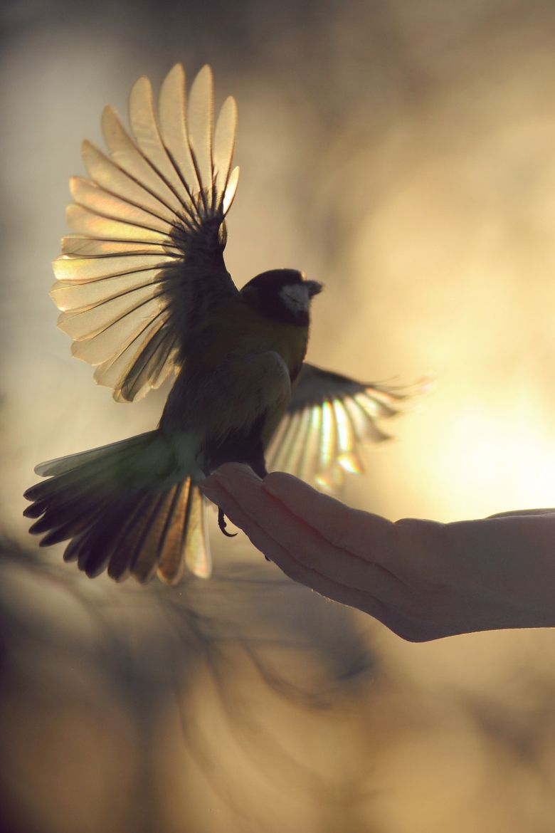 bird. flying, getting ready to fly … | Pinteres…