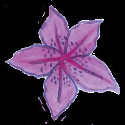 star flower purple