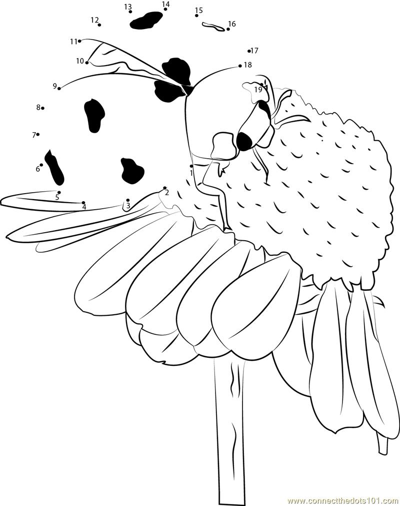 Ladybug Pollinate Flowers dot to dot printable worksheet - Connect ...