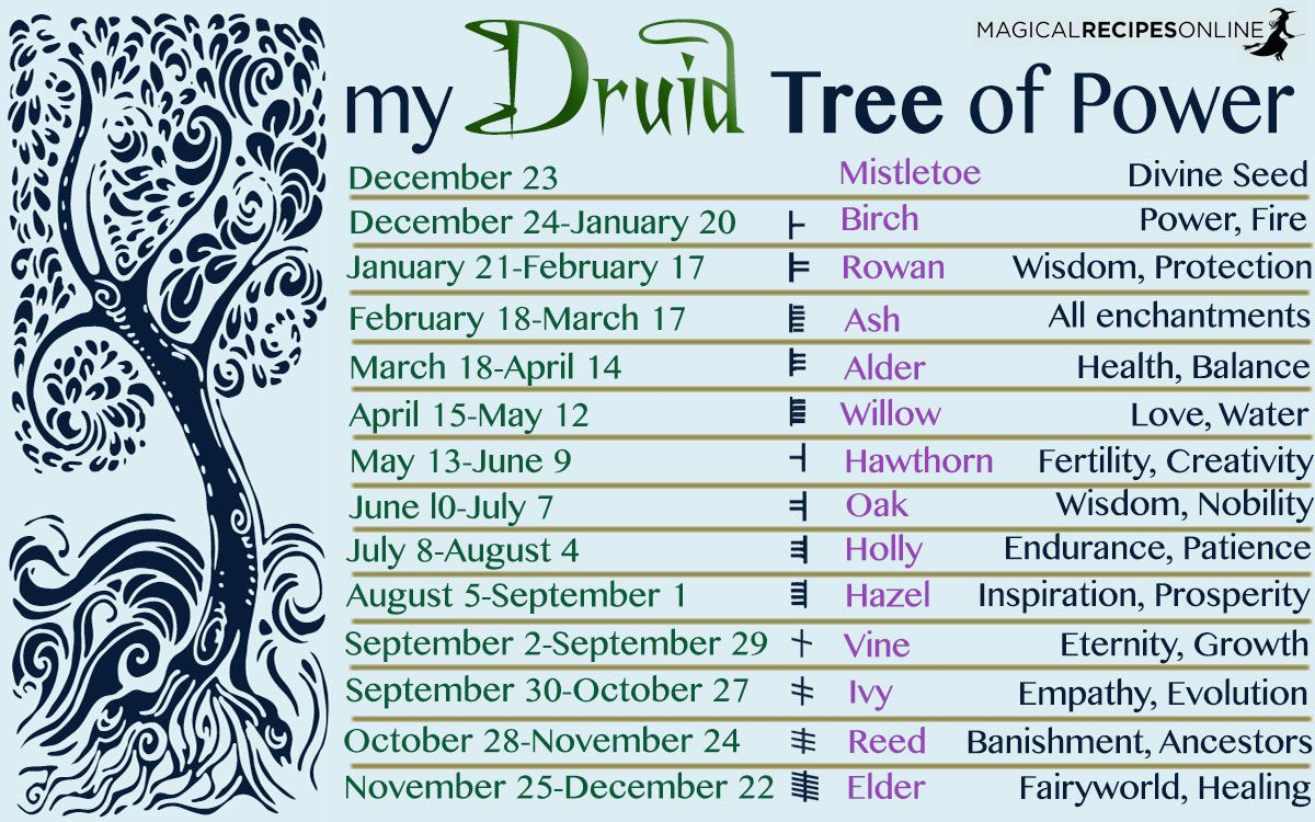 Druids magical trees of the year celtic astrology magical druids magical trees of the year celtic astrology magical recipes online script asyncsrc biocorpaavc Image collections