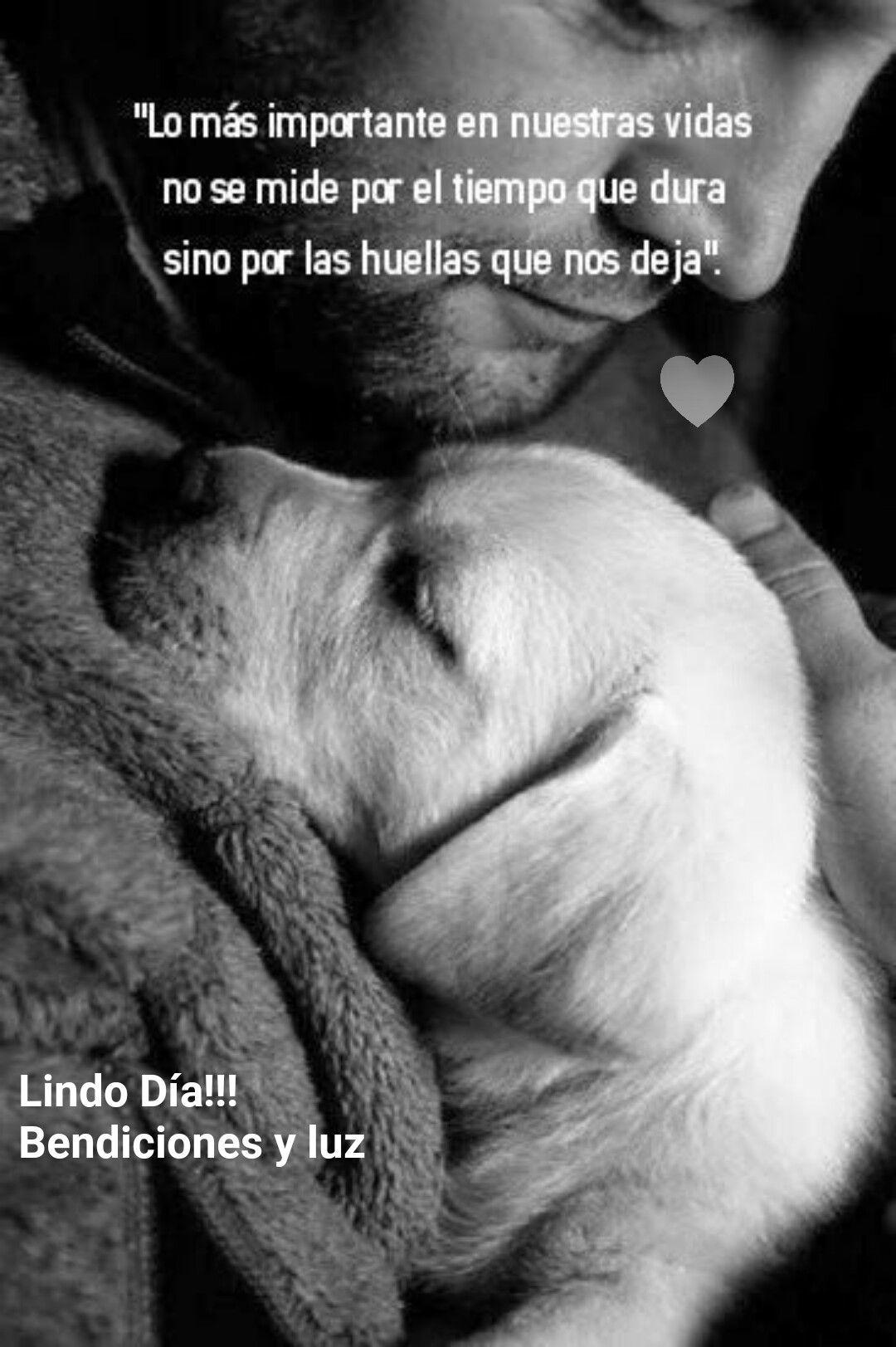 Pin De Fiorella En Frases Amor Animales Frases Animales