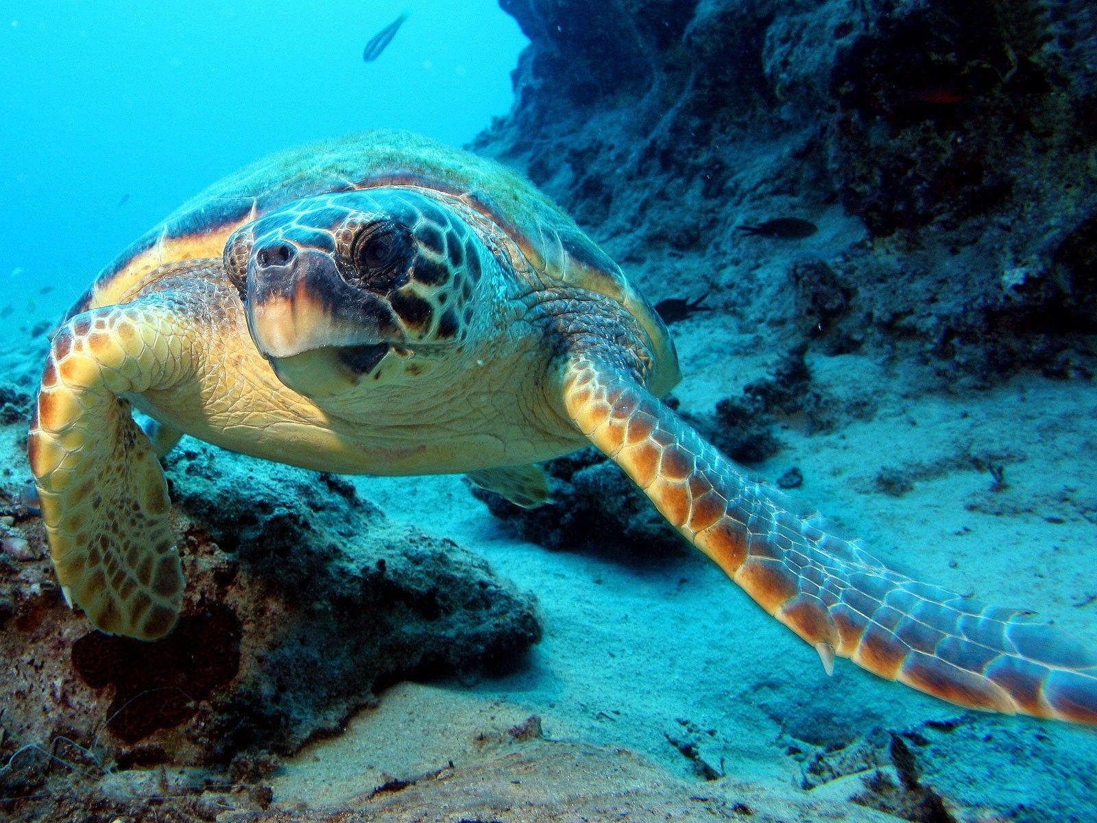 Http Freefreshwallpapers Com Wp Content Uploads 2013 01 Under The Ocean Life Wallpaper Jpg Beautiful Billede