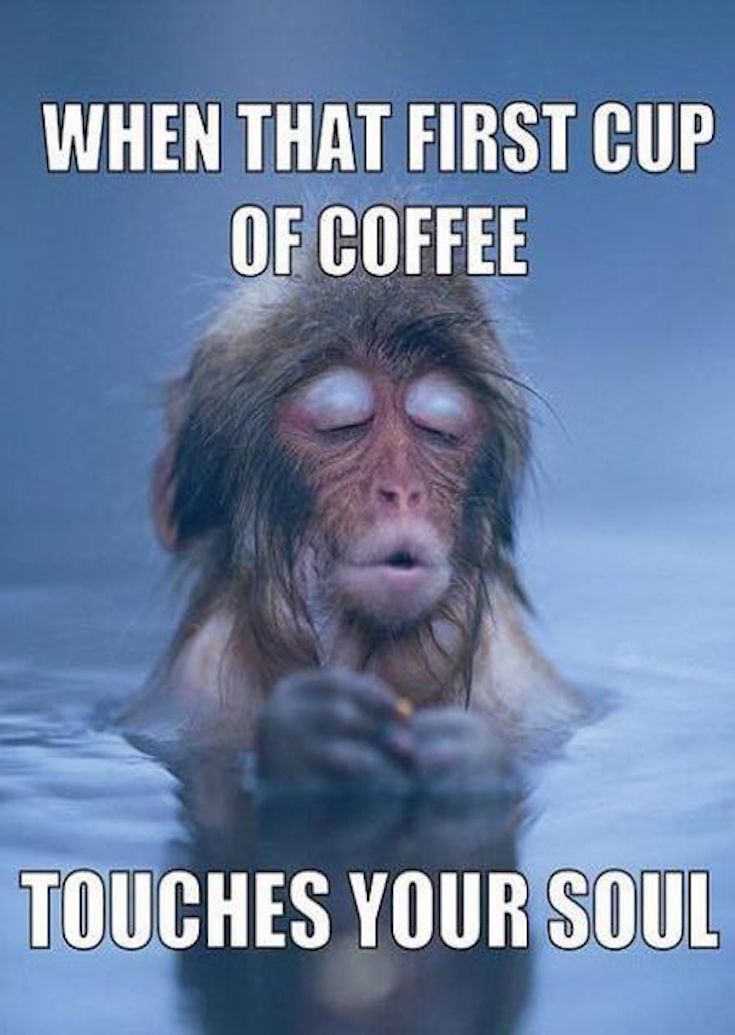 20 Funny Memes For Coffee Lovers Funny Good Morning Memes Morning Memes Coffee Humor