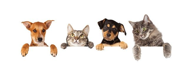 Dogs And Cats Hanging Over White Banner Puppy Images Dog Stock Images Pets