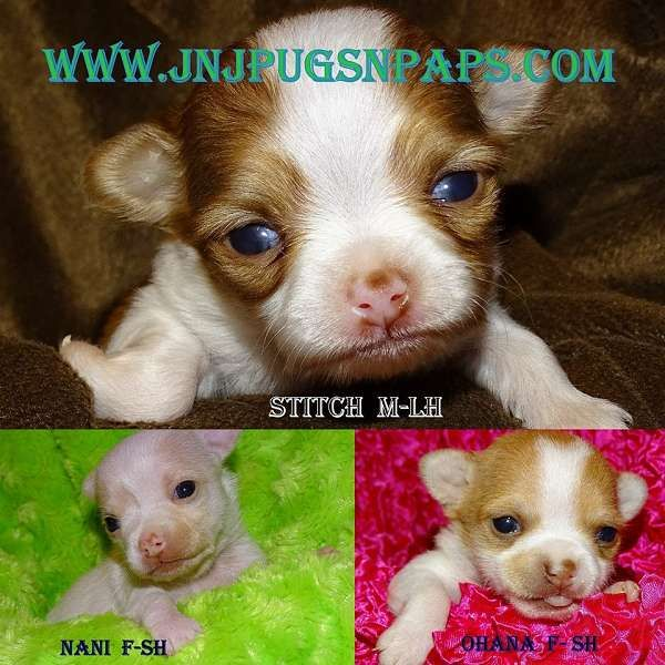 List A Dog For Sale Dogs For Sale Puppies For Sale Dogs