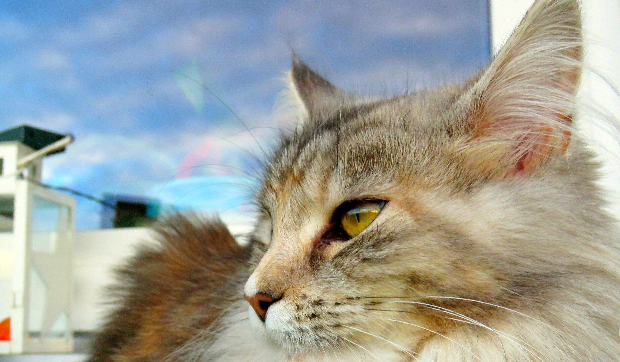 Miezi Close To Human Eye View Aka 44 Mm Quality Cat Cat Photo Kittens