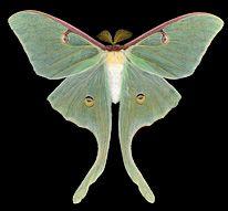 Cum se elimină cicatricile după papilom. Angajamentele noastre pentru o piele sănătoasă