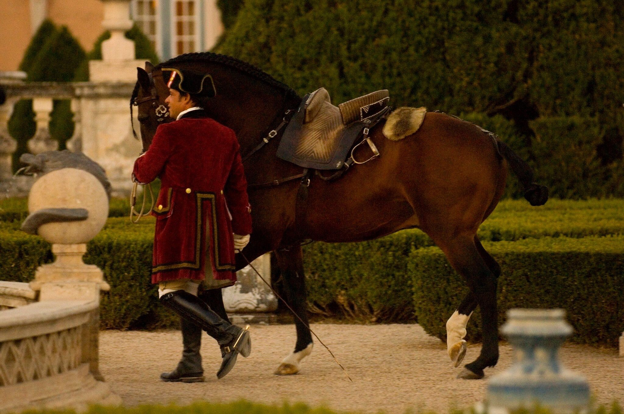 Pin By Serena Swan On Equestrian Schools Beautiful Horses Lusitano Horse Horses