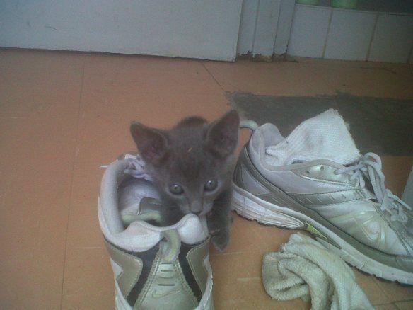 Kitty love!
